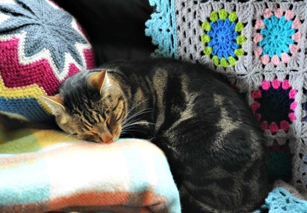 Catand crochet