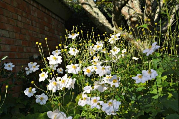 Hamilton Gardens April 2015 9